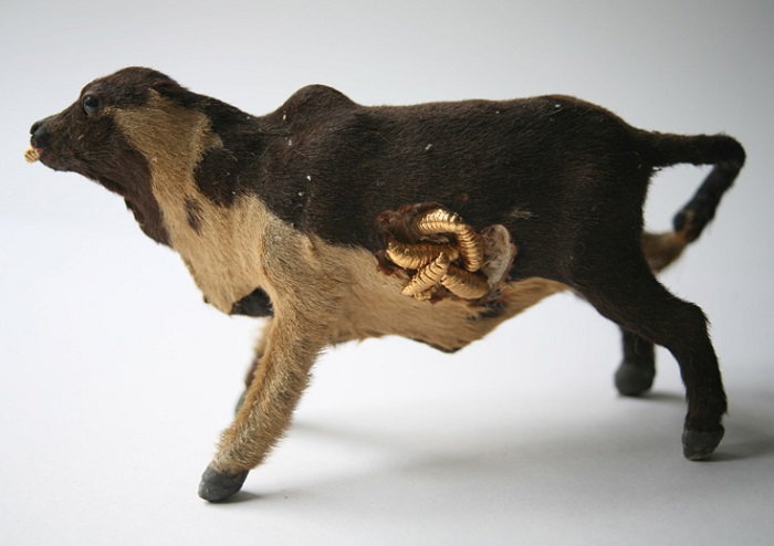 """""""Kelly McCallum  work is influenced by both story-telling and natural history, employing Victorian taxidermy as well as insects""""  Kelly McCallum Diamonds & Dead Things Kelly McCallum Diamonds Dead Things artists i lobo you5"""