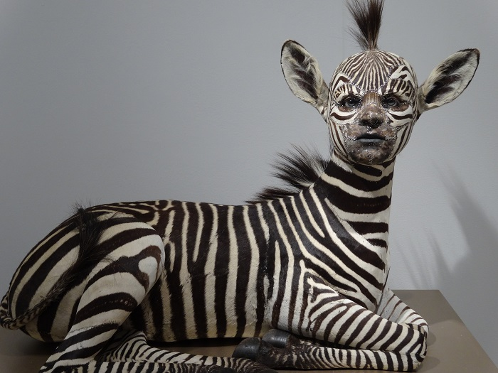 """""""This contemporary artist explores methods and materials that highlight illusionism of all forms to fool the viewers' eye.""""  Kate Clark contemporary animal sculptures Kate Clark contemporary animal sculptures artists i lobo you3"""