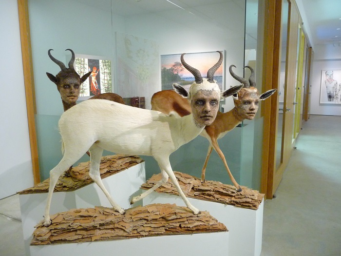 """""""This contemporary artist explores methods and materials that highlight illusionism of all forms to fool the viewers' eye.""""  Kate Clark contemporary animal sculptures Kate Clark contemporary animal sculptures artists i lobo you6"""