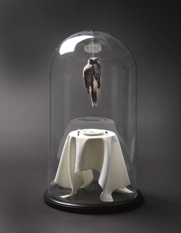 """""""Morgan is an artist that creates animal sculptures that creates an unique impact in people's reaction to dead and life.""""  Polly Morgan taxidermy sculptures Polly Morgan taxidermy sculptures artists i lobo you10"""