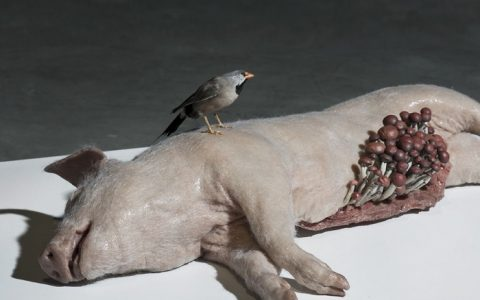 Polly Morgan taxidermy sculptures Polly Morgan taxidermy sculptures artists i lobo you9 480x300