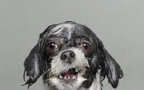 """""""I can't avoid to have a good laugh when looking at Sophie Gamand artistic photography with men's best friend: The dog."""""""