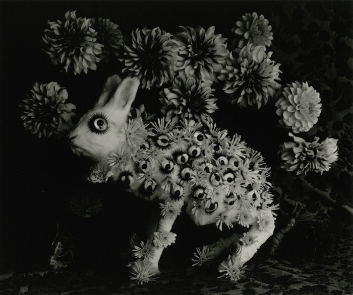 """""""Michiko Kon is a renowned unusual Japanese photographer. Her photographs are constructed, sharp, with deep blacks and bright whites, and quite humorous."""""""