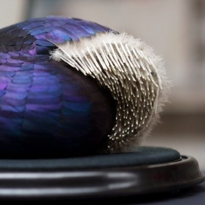 Kate MccGwire is a British sculptor that creates uncanny organic feather sculptures from layers of bird feathers.
