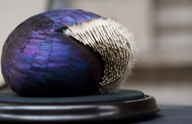 Kate MccGwire creates Feather Sculptures