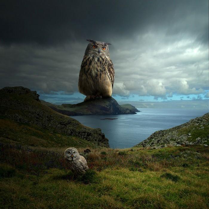 Surreal photo manipulations by Tomasz Zaczeniuk- artists I Lobo you6