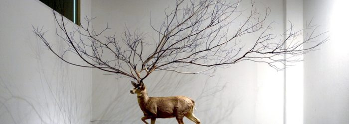 Myeongbeom Kim usesthemes of life and growth in nature to inspire him creating contemporary sculpturesof surreal situations.