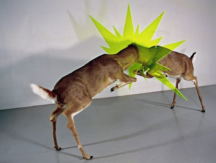 John Espinosa is anartist thatcaughtour attention with the contemporary sculpture of animals looking like having superpowers.