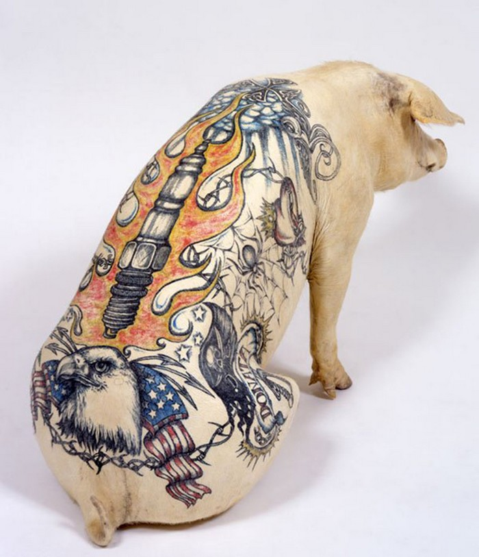 Wim Delvoye Artistic Pig Tattoos by Wim Delvoye Artistic Pig Taxidermy by Wim Delvoye artists I Lobo you8