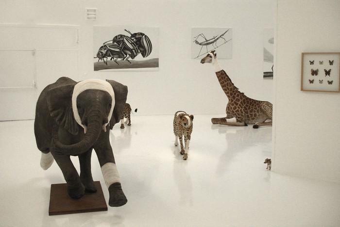 animal sculptures Contemporary animal sculptures by Pascal Bernier Contemporary animal sculptures by Pascal Bernier artists I Lobo you10