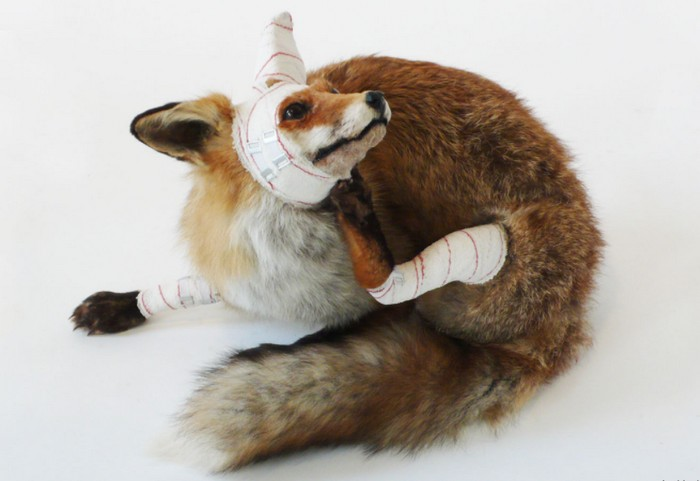 Pascal Bernier is a Belgian artist dedicated to showing the world a new differentsight about animals in hisanimal sculptures. animal sculptures Contemporary animal sculptures by Pascal Bernier Contemporary animal sculptures by Pascal Bernier artists I Lobo you12