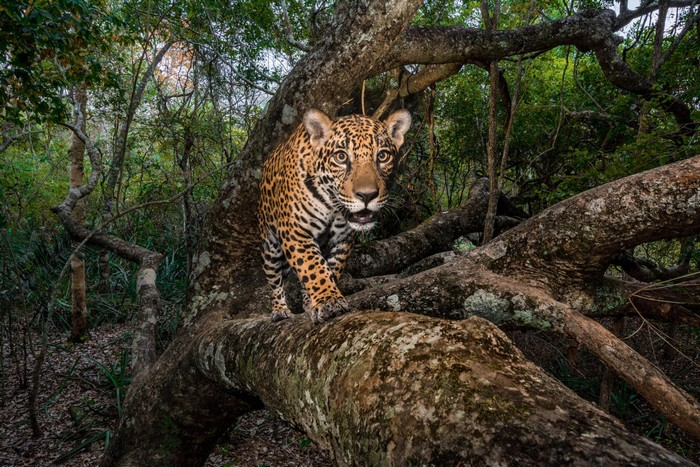 national geographic Discover National Geographic's Best Photos of 2017 Discover National Geographic   s Best Photos of 2017 I Lobo you14