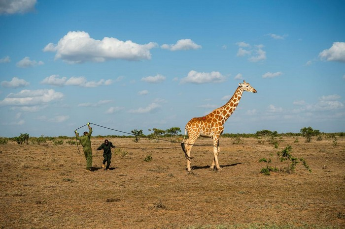 National Geographic already revealed the list of the best imagesby their photographers of 2017. national geographic Discover National Geographic's Best Photos of 2017 Discover National Geographic   s Best Photos of 2017 I Lobo you17