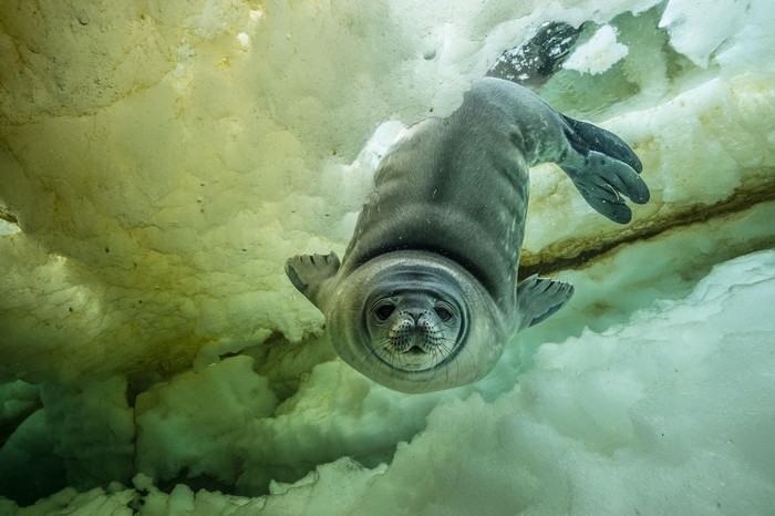 National Geographic already revealed the list of the best imagesby their photographers of 2017. national geographic Discover National Geographic's Best Photos of 2017 Discover National Geographic   s Best Photos of 2017 I Lobo you24